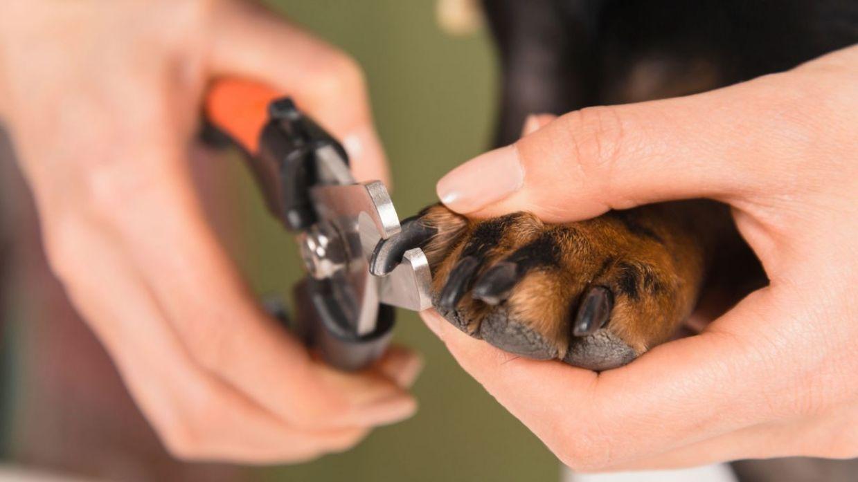 Resultado de imagen para cortar uñas perro